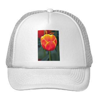 Bright red and yellow tulip bloom on green trucker hat
