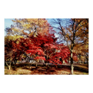 Bright Red Autumn Tree Poster