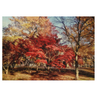 Bright Red Autumn Tree Wood Poster
