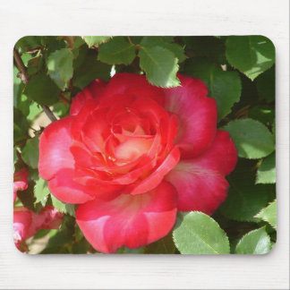Bright Red Beauty in the Shade Mousepad