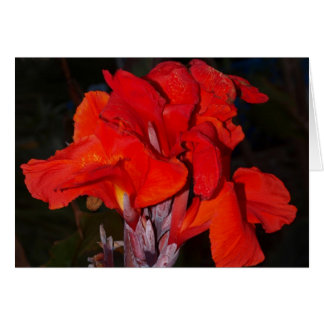 Bright red canna lily card