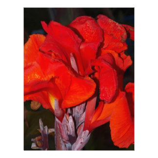 Bright Red Canna Lily Personalized Letterhead