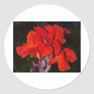 Bright Red Canna Lily Round Stickers