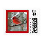 Bright Red Cardinal (Male) Postage Stamp