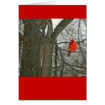 Bright Red Cardinal On Tree Branch (photog) Stationery Note Card