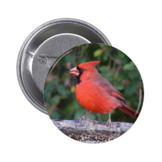 Bright Red Cardinal Pinback Button