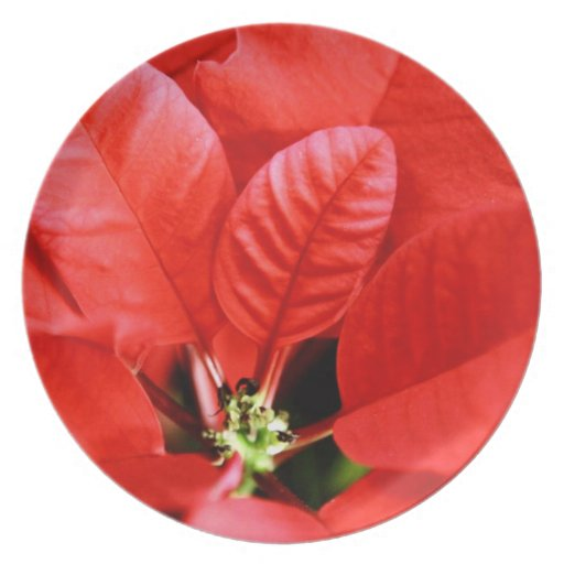 Bright Red Christmas Poinsettia Dinner Plate