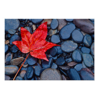 Bright Red Fall Leaf Poster