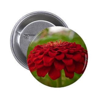 Bright Red Flower (Gift) Button