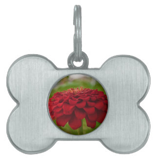 Bright Red Flower (Gift) Pet Tag