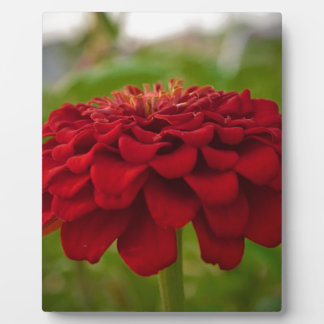 Bright Red Flower (Gift) Plaque