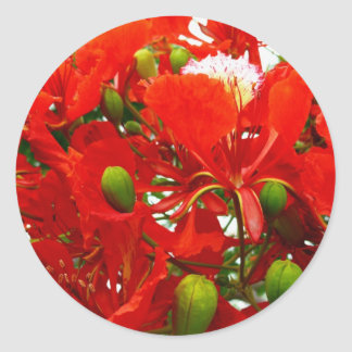 Bright Red Flowers Classic Round Sticker