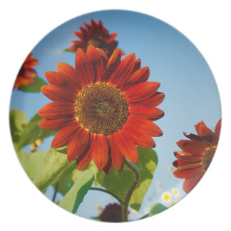 Bright Red Flowers in the Sun Dinner Plate
