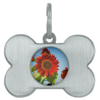 Bright Red Flowers in the Sun Pet Name Tag