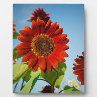 Bright Red Flowers in the Sun Plaque