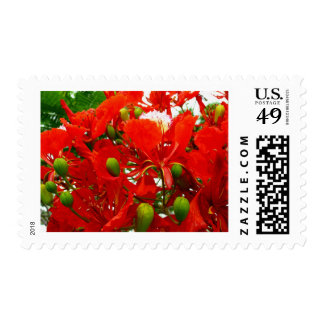 Bright Red Flowers Postage