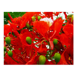 Bright Red Flowers Postcard