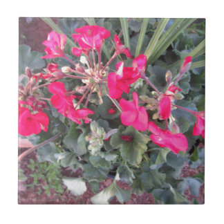 Bright Red Flowers Small Square Tile