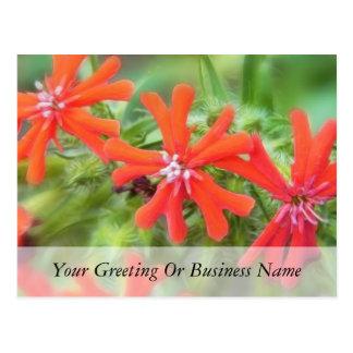 Bright Red Maltese Cross Postcard