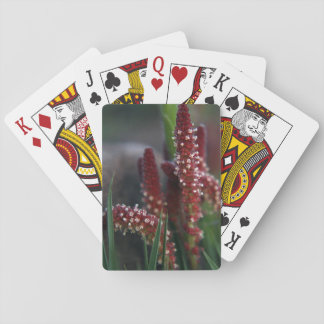 Bright Red Mountain Flowers Playing Cards