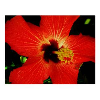 Bright Red Orange  Hibiscus Flower Postcard