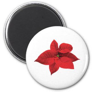 Bright Red Poinsettia Fridge Magnets