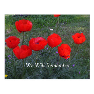 Bright Red Poppies Postcard