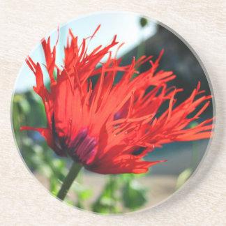 Bright Red Poppy Flower Coaster