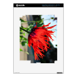 Bright Red Poppy Flower iPad 3 Decal