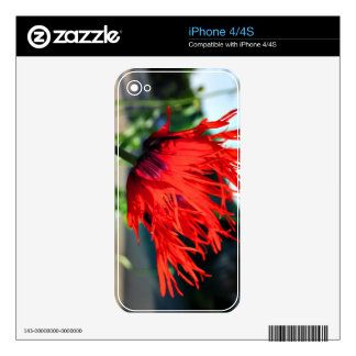 Bright Red Poppy Flower iPhone 4S Skins