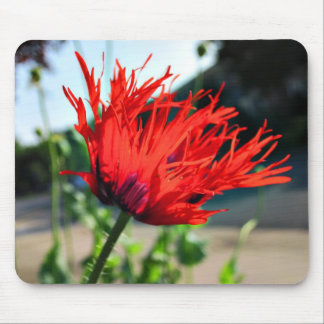 Bright Red Poppy Flower Mouse Pad