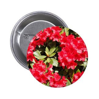 Bright Red Rhododendron Flowers Pinback Buttons