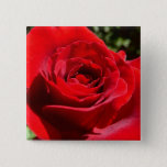 Bright Red Rose Flower Beautiful Floral Button