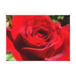 Bright Red Rose Flower Beautiful Floral Canvas Print