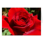 Bright Red Rose Flower Beautiful Floral Card