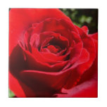 Bright Red Rose Flower Beautiful Floral Ceramic Tile