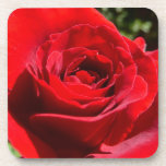 Bright Red Rose Flower Beautiful Floral Coaster