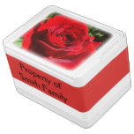 Bright Red Rose Flower Beautiful Floral Drink Cooler