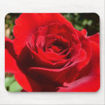 Bright Red Rose Flower Beautiful Floral Mouse Pad