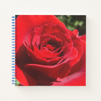 Bright Red Rose Flower Beautiful Floral Notebook