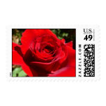 Bright Red Rose Flower Beautiful Floral Postage