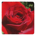 Bright Red Rose Flower Beautiful Floral Trivet
