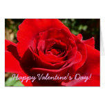 Bright Red Rose Valentine's Day Card