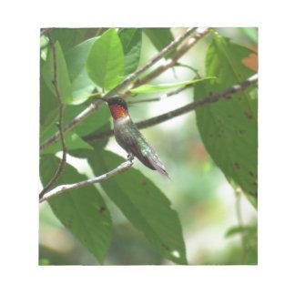 Bright Red Ruby-Throat Hummingbird Memo Pad