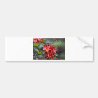 Bright Red Spring Blooming Azaleas Pentanthera Bumper Sticker