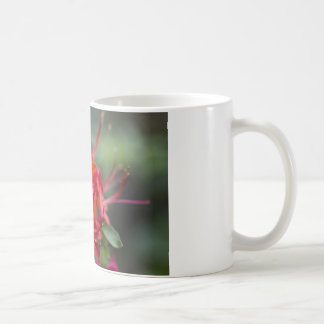 Bright Red Spring Blooming Azaleas Pentanthera Classic White Coffee Mug