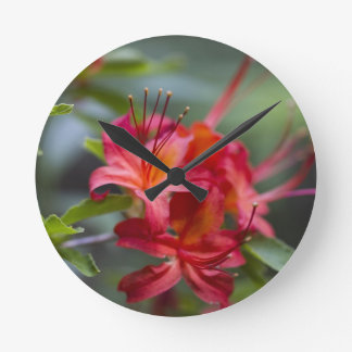 Bright Red Spring Blooming Azaleas Pentanthera Wall Clocks