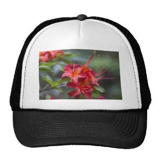 Bright Red Spring Blooming Azaleas Pentanthera Trucker Hat