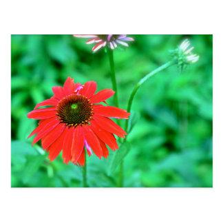 Bright Red Sumer Flower Postcard