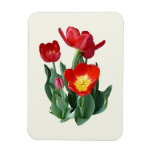Bright Red Tulips Flexible Magnets